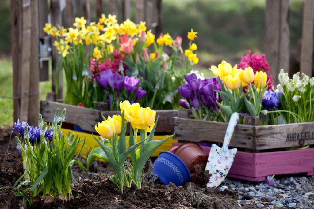 Как вырастить луковичные цветы на балконе: полезные советы